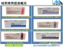 【美瑞大讲堂】第142期:母猪免疫程序制定