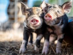 【行业动态】官方发布:动物疫情风险增大,防疫应做好七大项!